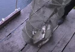 Секреты успешной рыбалки на реке, ловля леща