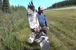 Дядя Вова: Канадский бирюк. Орлята учатся летать  (Часть 55)