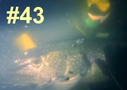 Сергей Сорокин: Подводная Охота #43, Щука 12 кг