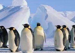 Дикая Антарктика
