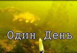 Александр Бухонин: Подводная охота на толстолобика, сазана и сома (один день)