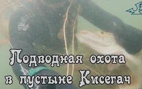 Алексей Крылов: Подводная охота в пустыне Кисегач