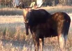 Дядя Вова: 5 октября. Первая поездка на охоту на пернатых в 2015
