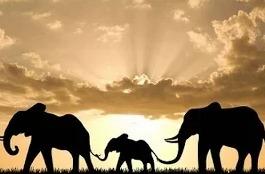Индия - Царство слонов