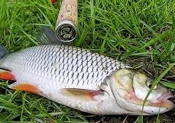Рыбалка осенью: ловля голавля на Волге