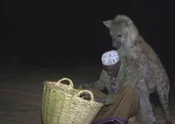 Эфиопец приручил гиен