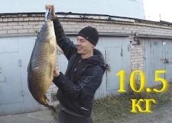 Василий Белоногов: Подводная охота осенью на сазана 10.5 кг