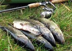 Рыбалка на Волге, ловля щуки на спиннинг осенью