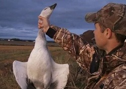 Охота в Северной Америке на белого гуся