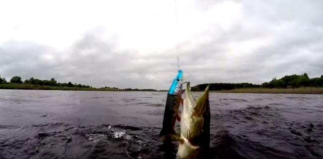 Подводная Ирландия: Рыбалка в Ирландии 7 щук за полдня