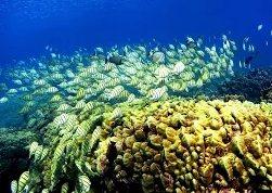 Кораллы под угрозой исчезновения