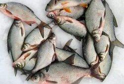 Андрей Слепнёв: Уловистая прикормка для зимней рыбалки