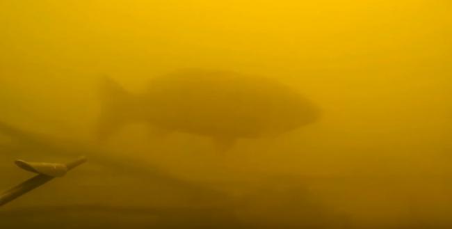 Илдар Сибгатуллин: Подводная охота на сазана и карпа в залежке