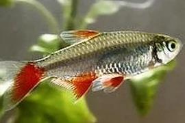 Атлас-определитель рыб
