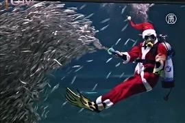 Санта-Клаус дрессирует ската и косяк сардин в Сеуле