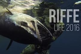 Подводная охота 2016 / Spearfishing - Riffe Life 2016