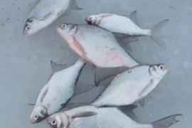 Диалоги о рыбалке: Подледная рыбалка в Черногория