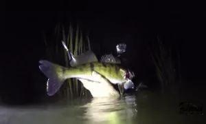 На Кубани установлен запрет на подводную охоту ночнью