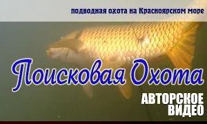 Владислав Владимирович: Поисковая подводная охота. Красноярское море, сазан, щука.