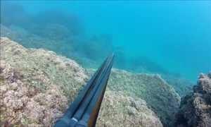 Про Израиль и подводную охоту
