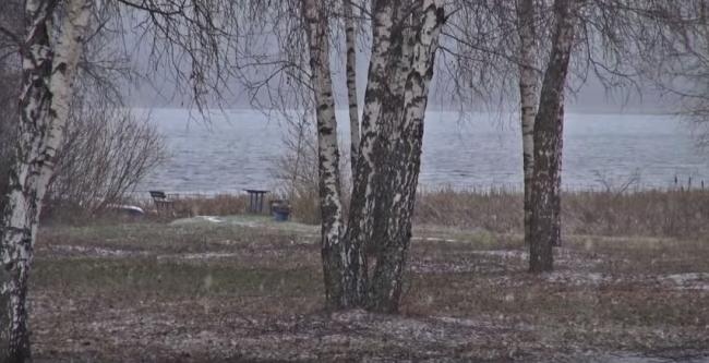 Русские березки