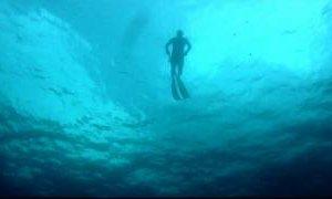 Freediving Spearfishing - 19lb Mutton, Amberjack, Cobia, King Mackerel