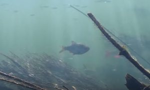 ����� �����: ������������ ��� (Spearfishing)