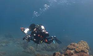 Дайвинг-туры в Индонезию: погружение в первозданный мир.
