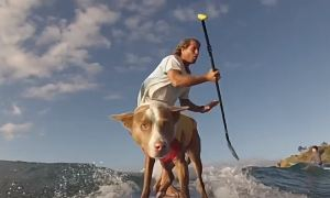 Собаки серфингисты в Австралии.