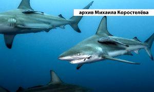Подводный мир Михаила Коростелева