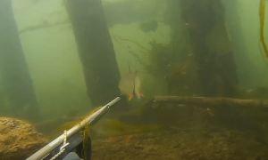 Илдар Сибгатуллин: Подводная охота на жереха. Мои встречи с жерехом