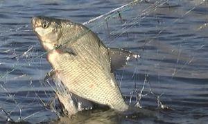 Штрафы и наказания за незаконную рыбалку в 2017 году