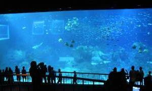 Подводный рай Сингапура