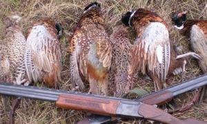 Как сохранить добытую дичь на охоте