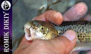 Горная рыбалка на османа