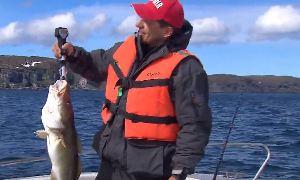 Олег Кузин: Как правильно ловить треску и палтуса