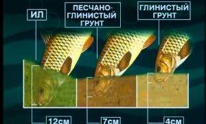 Ахтуба - сазан. Диалоги о рыбалке