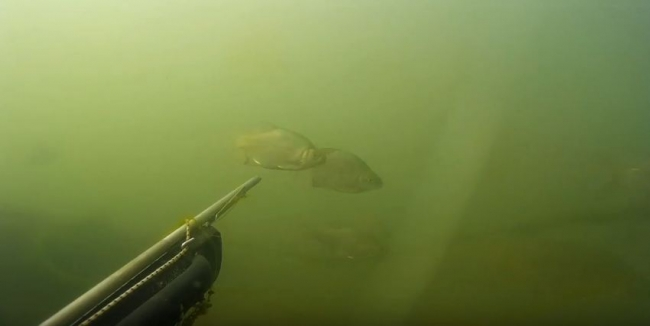 Подводная охота на малых реках (Любимая речка)