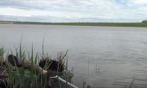 Ловля сазана на поплавочную удочку весной