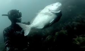 ��������� ����� � ����� �������� | Spearfishing New Zealand
