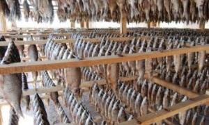 Хранение вяленой, соленой и копченой рыбы