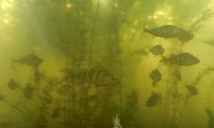 Подводная охота на Краснооскольском Водохранилище