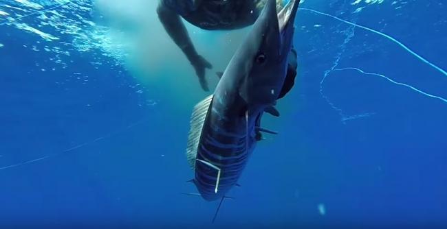 Подводная охота в Австралии