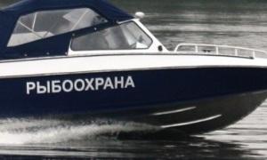О рыбе, рыбнадзоре и браконьерах