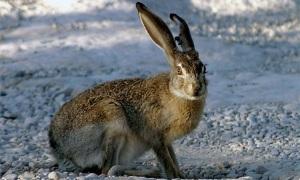 Охота на зайца - Настоящая русская охота