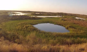 Ромик Дикий: Рыбалка и охота на Топарских озёрах. Утка змееголов и сомик.