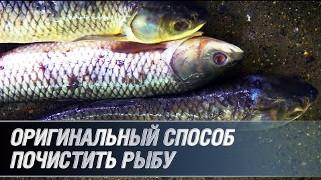 Оригинальный способ почистить рыбу