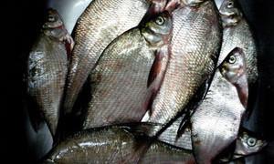 Рыбалка на реке Пахра в Московской области.