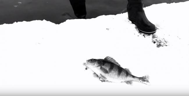 Зимняя ловля на спиннинг (Москва река)