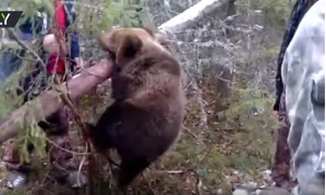 Спасение медвежонка из капкана